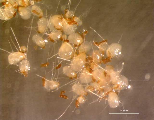 Lidl mikroskop seite orchideenforum